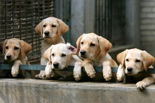 Pet buyers beware: Puppy scams on the rise