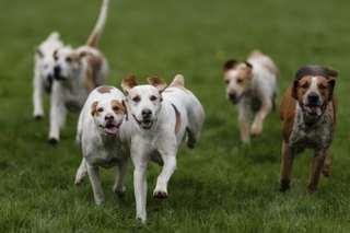 Local shelter needs dog food